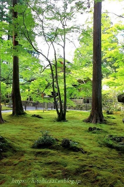 京都 大原 三千院 ①新緑と苔_f0374092_19120451.jpg