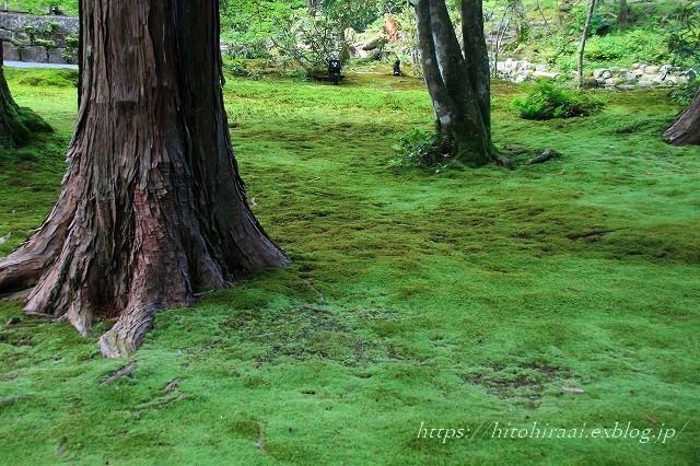 京都 大原 三千院 ①新緑と苔_f0374092_19124326.jpg