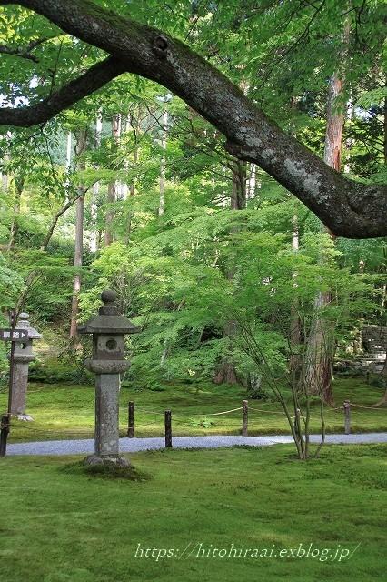 京都 大原 三千院 ①新緑と苔_f0374092_19132982.jpg