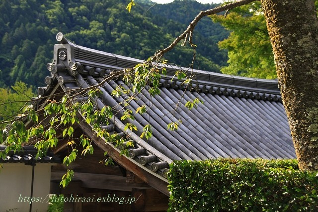 京都 大原 三千院 ①新緑と苔_f0374092_19135490.jpg