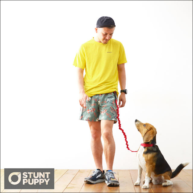 STUNT PUPPY [スタントパピー] EVERYDAY COLLAR SMALL[EC001] カラー・リード・首輪・MEN\'S/LADY\'S_f0051306_16195562.jpg
