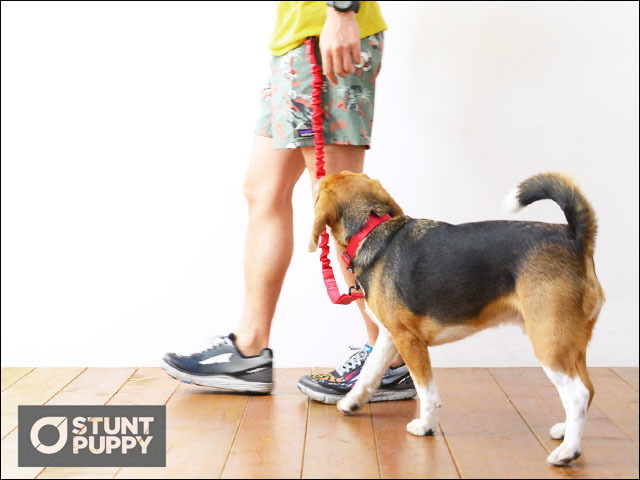 STUNT PUPPY [スタントパピー] EVERYDAY COLLAR [EC001] カラー・リード・首輪 MEN\'S/LADY\'S _f0051306_16234782.jpg