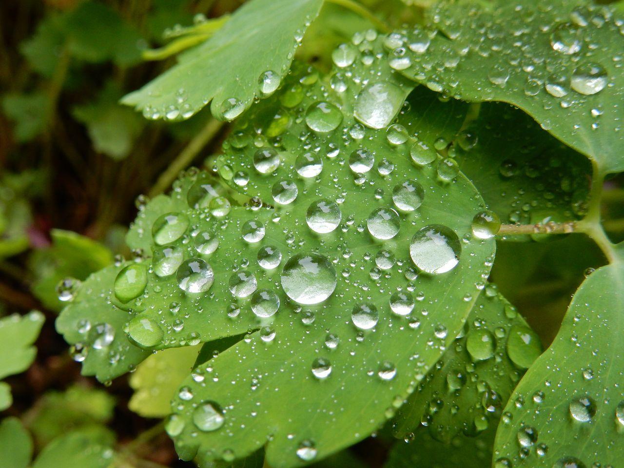 昼まで本格的な雨が続く_c0025115_22223094.jpg