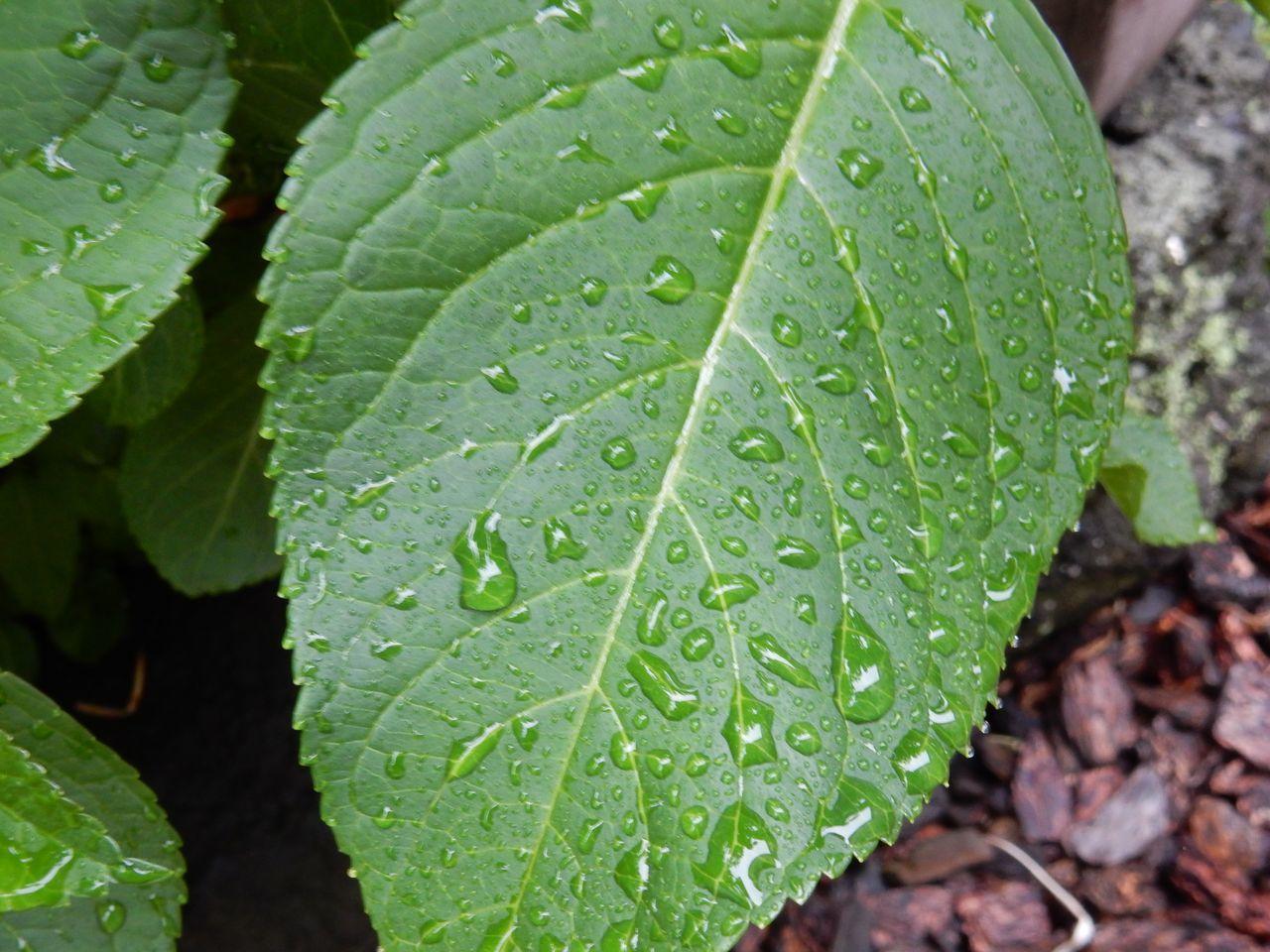 昼まで本格的な雨が続く_c0025115_22230211.jpg