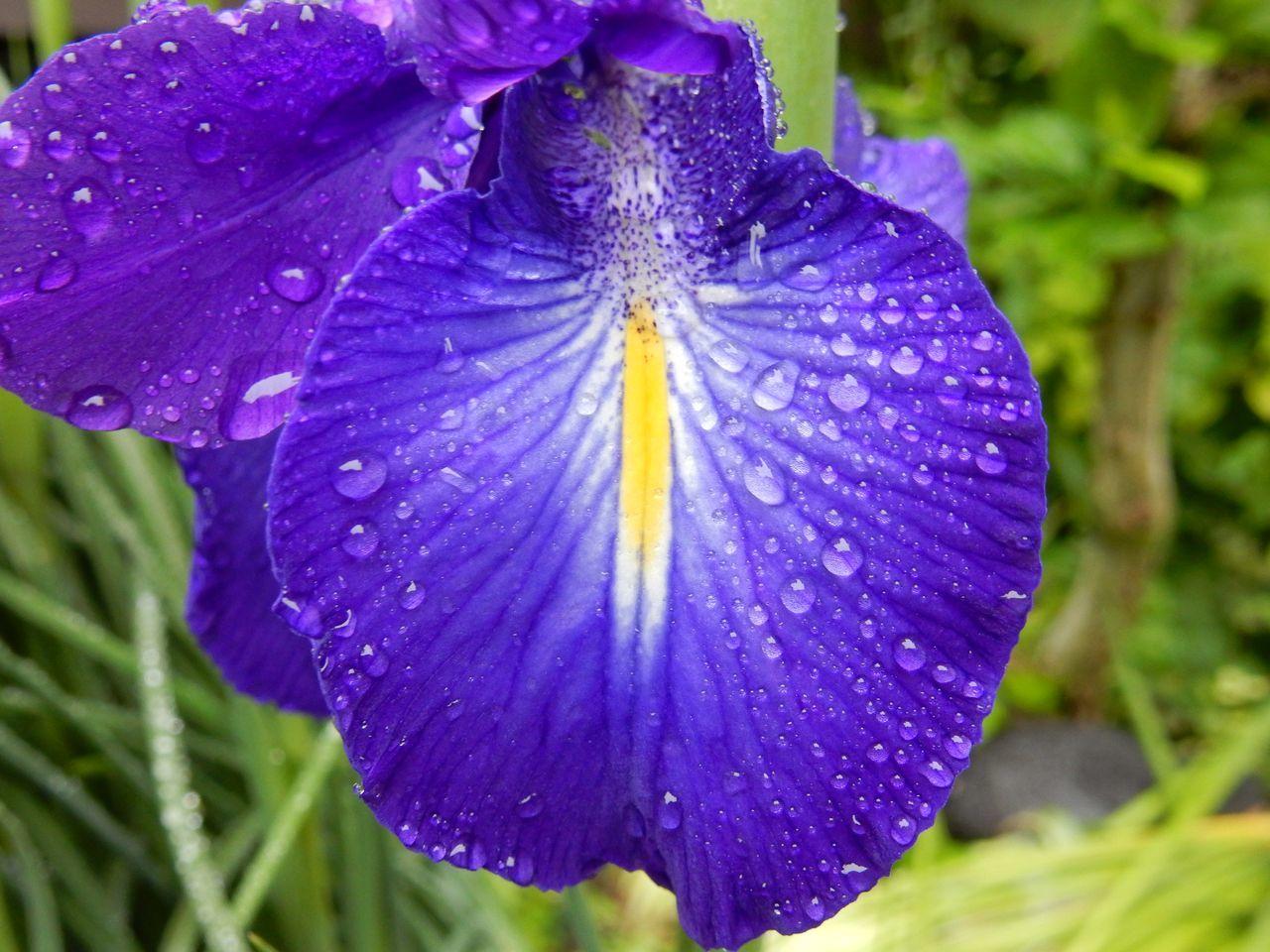 昼まで本格的な雨が続く_c0025115_22270093.jpg