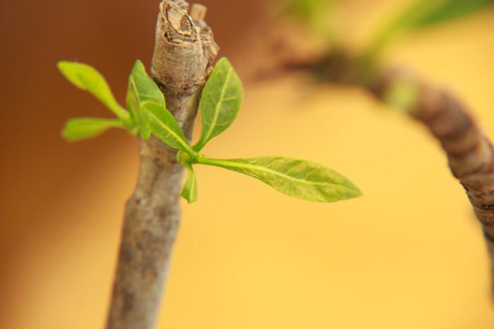 挿し木で成長_c0120834_14572509.jpg