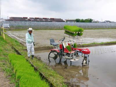 健康農園さんの無農薬栽培『雑穀米』『発芽玄米』大好評販売中!平成30年度の田植えの様子を現地取材!_a0254656_17240152.jpg