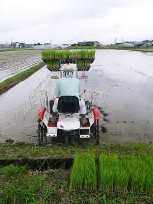 健康農園さんの無農薬栽培『雑穀米』『発芽玄米』大好評販売中!平成30年度の田植えの様子を現地取材!_a0254656_17492989.jpg