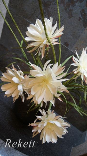 一夜限りの神秘の白い花~❤_f0029571_00371131.jpg