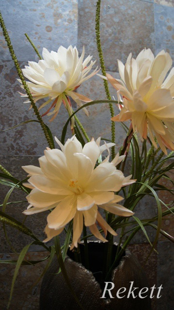 一夜限りの神秘の白い花~❤_f0029571_00440885.jpg