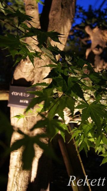 一夜限りの神秘の白い花~❤_f0029571_00464560.jpg
