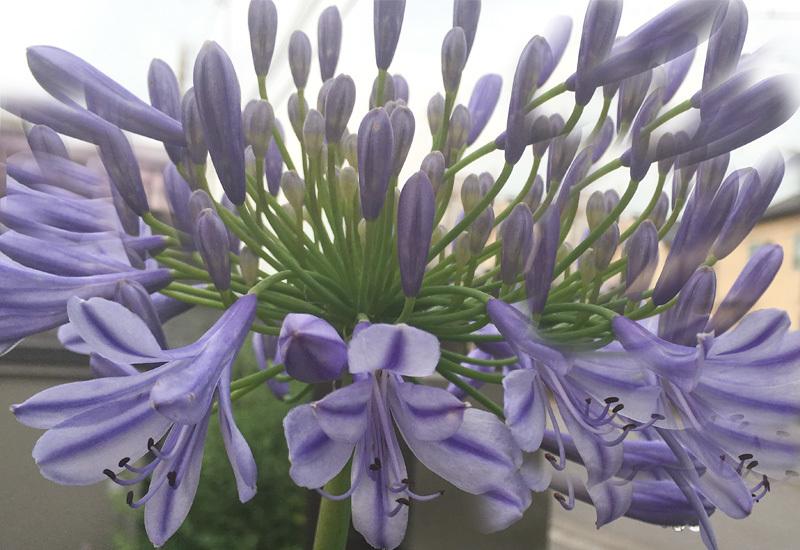 庭の花たち・・です。_f0368272_20350287.jpg