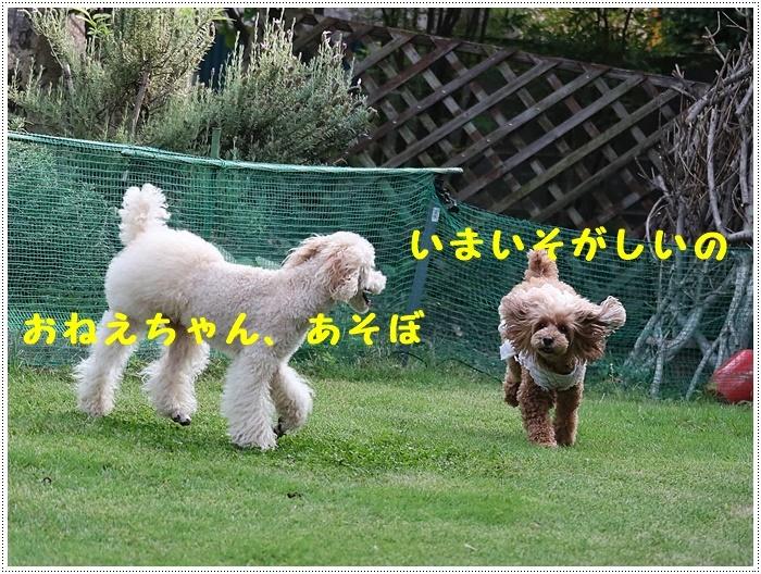 b0175688_20082121.jpg