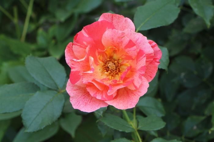 夏の庭は_d0150720_11195448.jpg