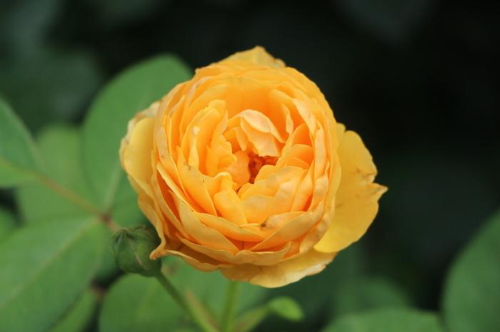 夏の庭は_d0150720_11215426.jpg