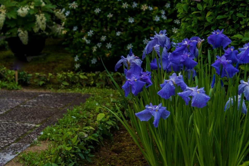東林院~沙羅の花を愛でる会_e0363038_10372243.jpg