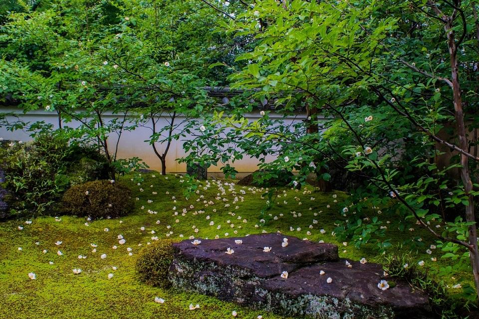 東林院~沙羅の花を愛でる会_e0363038_10373387.jpg