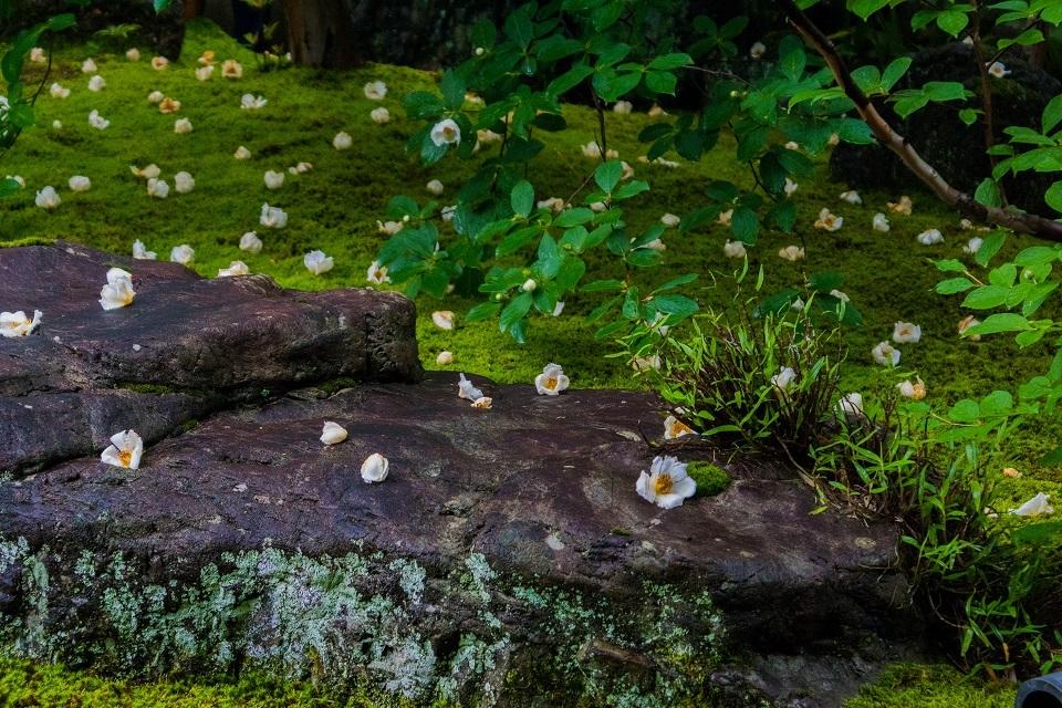 東林院~沙羅の花を愛でる会_e0363038_10380524.jpg