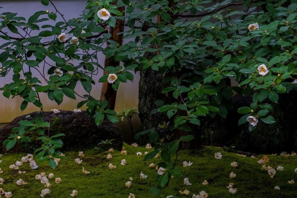 東林院~沙羅の花を愛でる会_e0363038_10381760.jpg