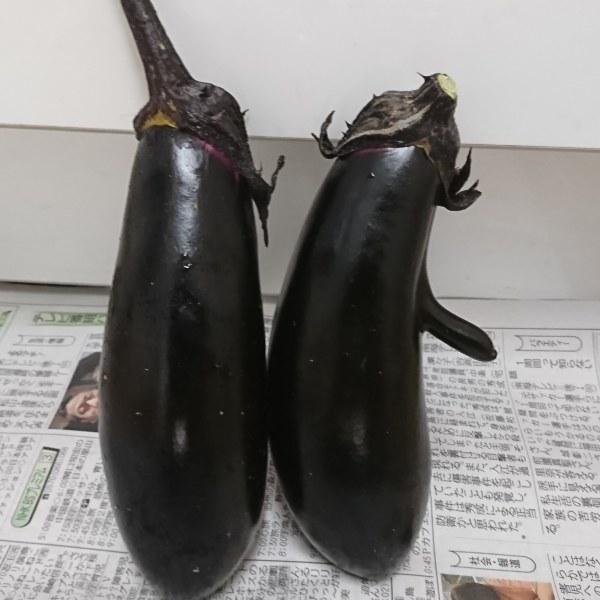 ++6月のお野菜便*++_e0354456_09230707.jpg