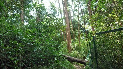 境界フェンス破壊し、赤道塞ぐ枯れ木処理6・27六国見山臨時_c0014967_17404029.jpg