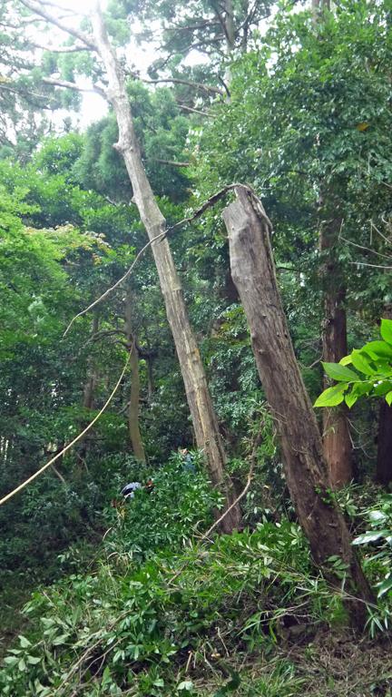 境界フェンス破壊し、赤道塞ぐ枯れ木処理6・27六国見山臨時_c0014967_17444382.jpg