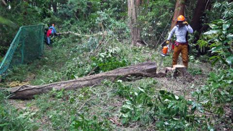境界フェンス破壊し、赤道塞ぐ枯れ木処理6・27六国見山臨時_c0014967_17491828.jpg