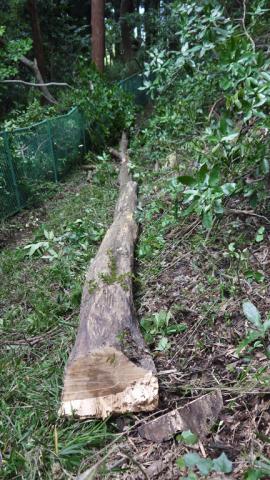 境界フェンス破壊し、赤道塞ぐ枯れ木処理6・27六国見山臨時_c0014967_17565022.jpg