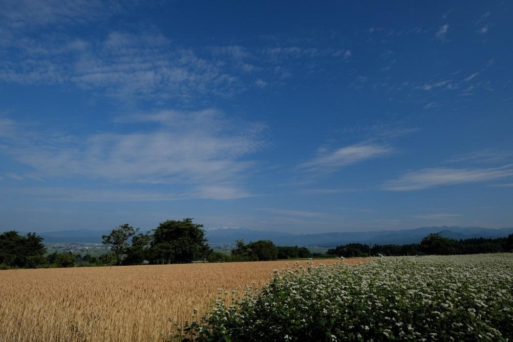 麦と蕎麦・・・焼酎に非ズ_e0143883_17015035.jpg