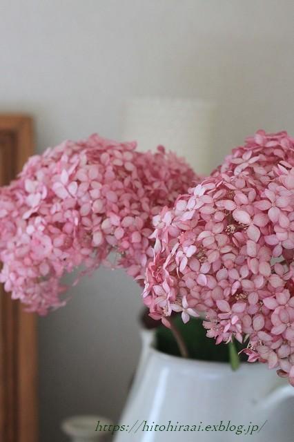 ピンクのアナベル_f0374092_17315504.jpg