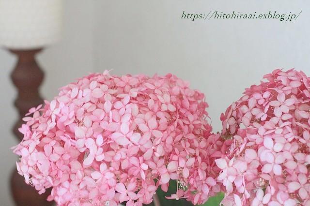 ピンクのアナベル_f0374092_17320192.jpg