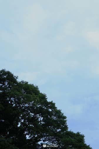 今日は雨の予報です♪(#^^#)_c0140599_11452168.jpg