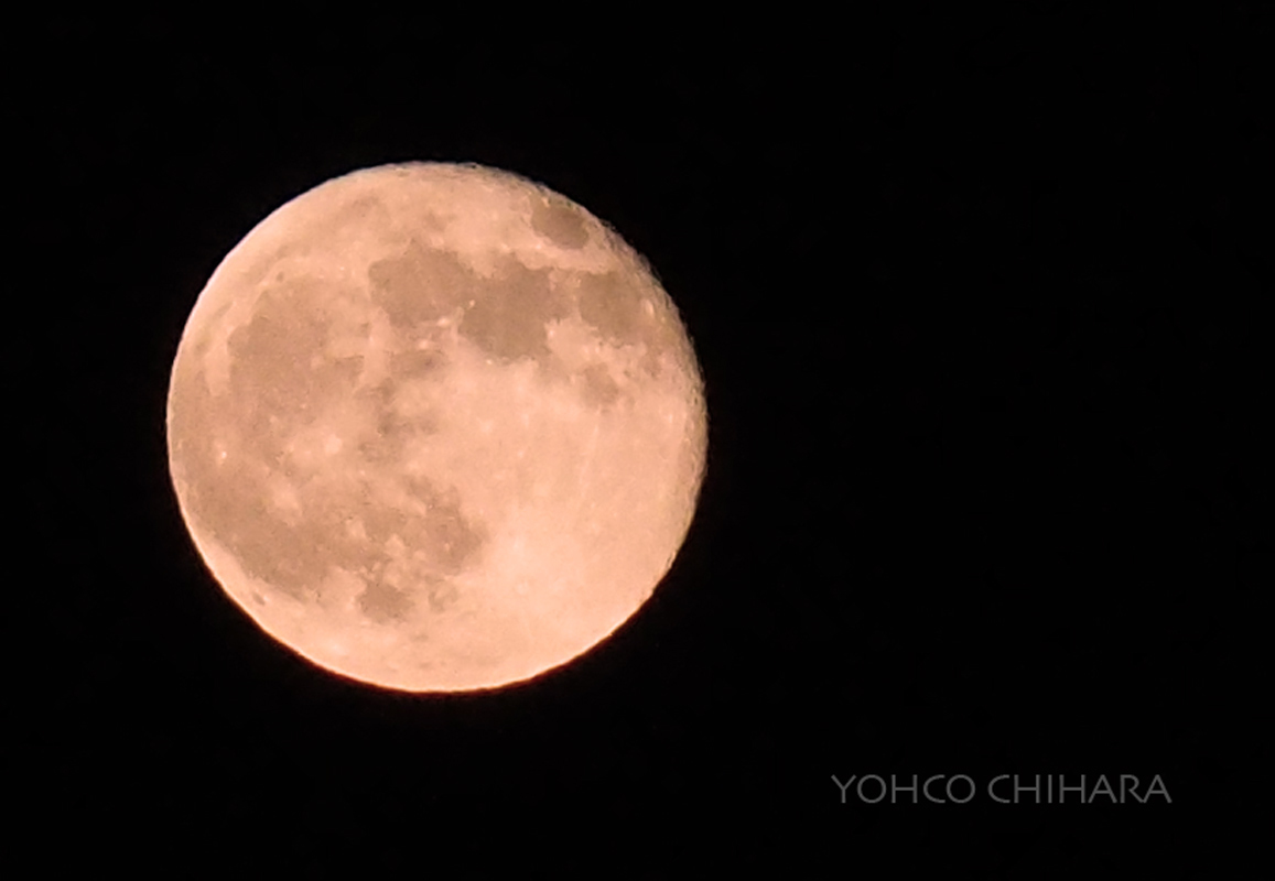 #After Strawberry Moon_d0138811_20372235.jpg