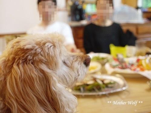 ゲストハウス@伊豆高原で、パーティーして来ましたよ~ん♪_e0191026_11110517.jpg