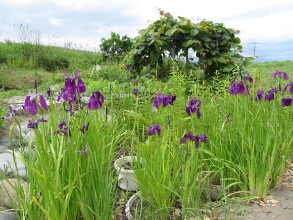観察園の花々_f0354435_15441935.jpg