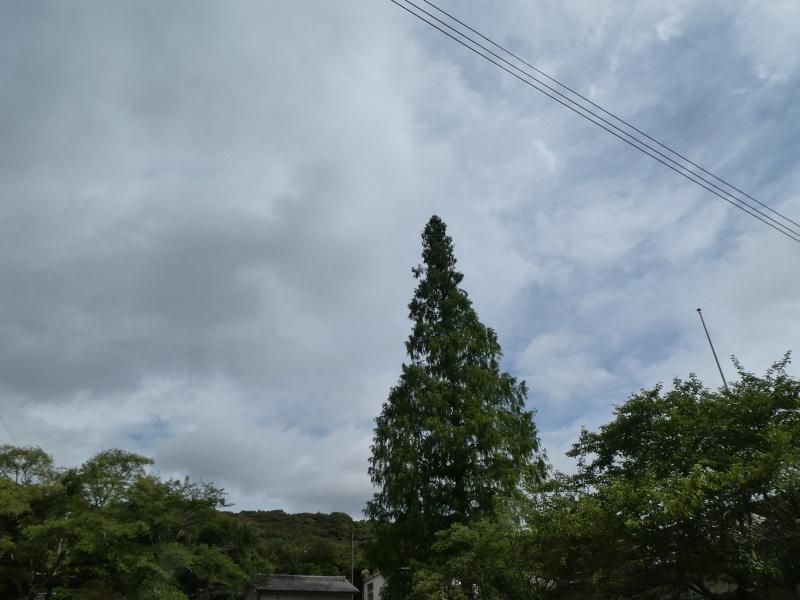 杉丸太の皮剥き・・・孝子の森_c0108460_19584888.jpg