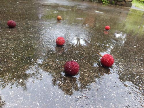 庭の赤い実~山桃_d0336460_00424544.jpg