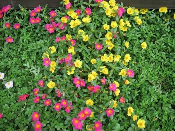 庭の花_d0277868_21250106.jpg