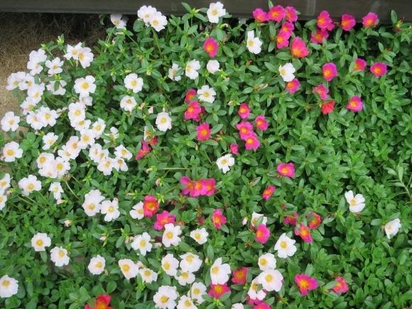 庭の花_d0277868_21250808.jpg