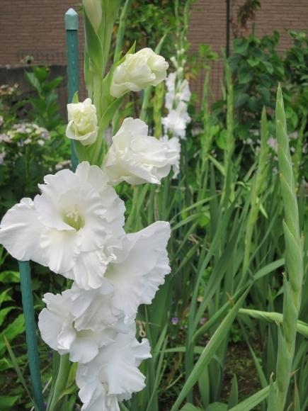 庭の花_d0277868_21251260.jpg