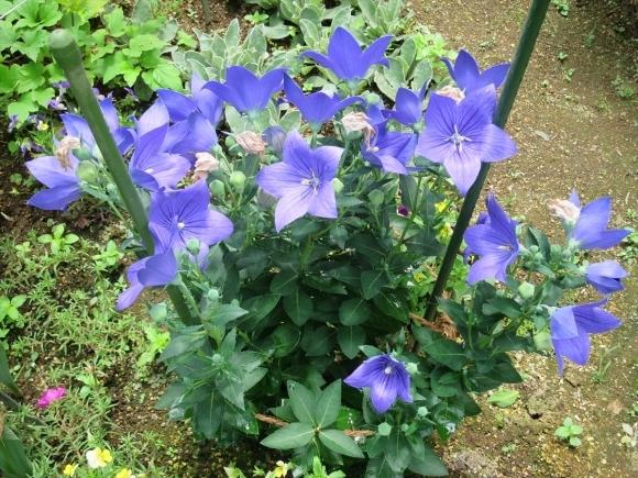 庭の花_d0277868_21251719.jpg