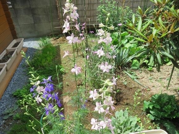 庭の花_d0277868_21253382.jpg