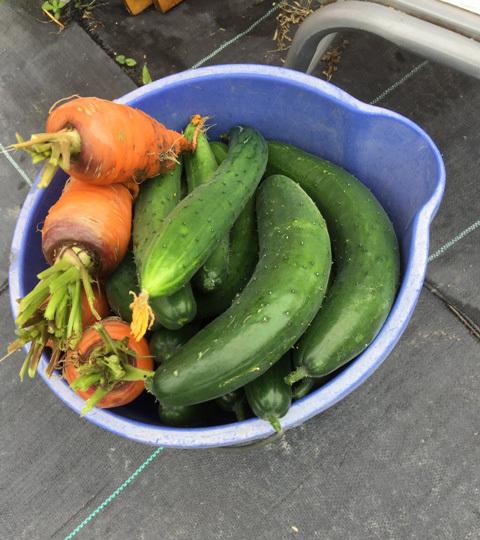 北摂の6月の家庭菜園・・その6_f0229190_11472194.jpg