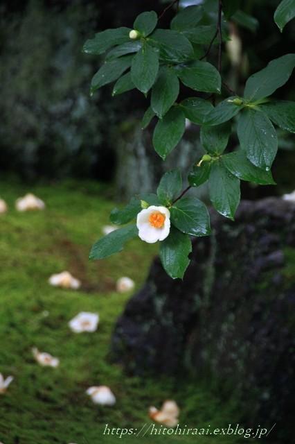 京都 妙心寺 東林院 沙羅の花を愛でる会_f0374092_21525294.jpg