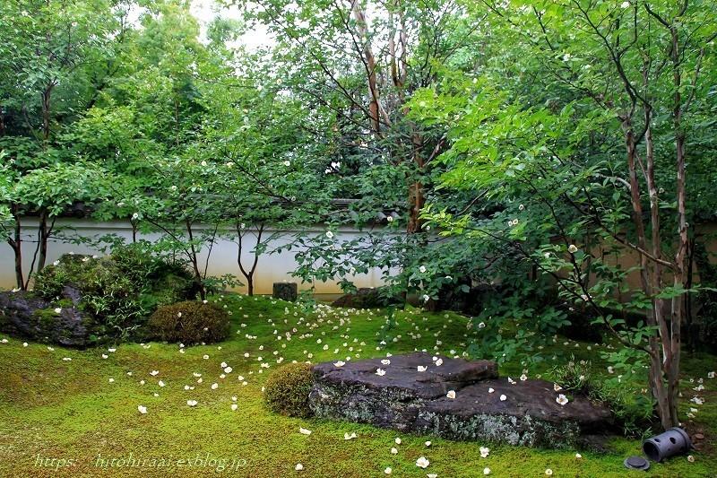 京都 妙心寺 東林院 沙羅の花を愛でる会_f0374092_21535159.jpg