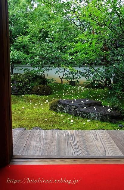 京都 妙心寺 東林院 沙羅の花を愛でる会_f0374092_21595992.jpg