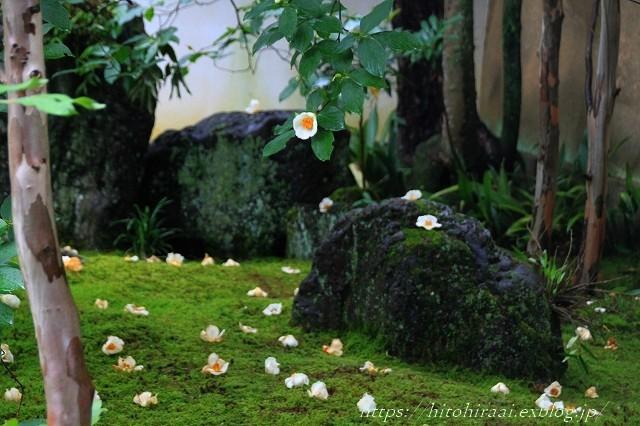 京都 妙心寺 東林院 沙羅の花を愛でる会_f0374092_22003661.jpg
