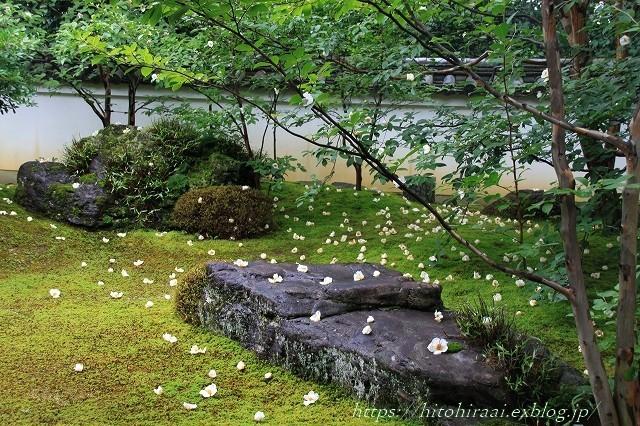 京都 妙心寺 東林院 沙羅の花を愛でる会_f0374092_22015850.jpg