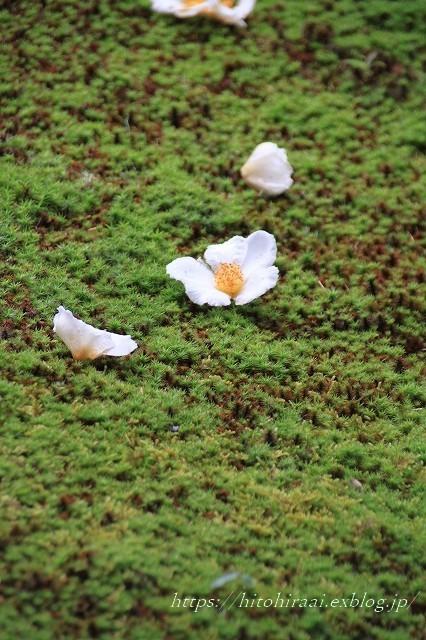 京都 妙心寺 東林院 沙羅の花を愛でる会_f0374092_22021625.jpg
