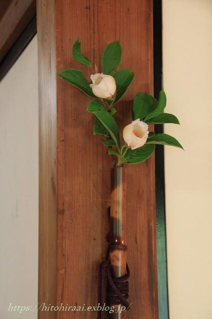 京都 妙心寺 東林院 沙羅の花を愛でる会_f0374092_22023782.jpg